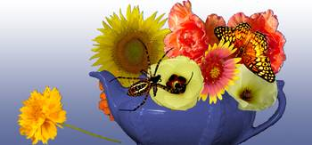Teapot with Flowers, Spider, & Butterfly