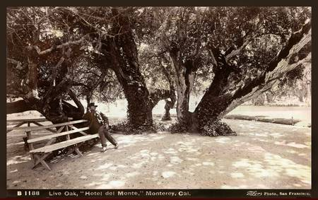 Summer at the Del Monte Hotel, Monterey