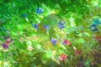 Sun Bubble Plays in Mamaw's Morning Glories byJudy
