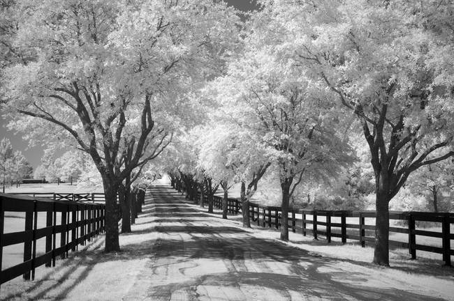 Country road infrared trees landscape by mike irwin