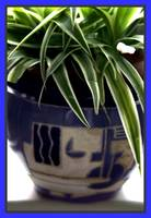Potted Plant 1