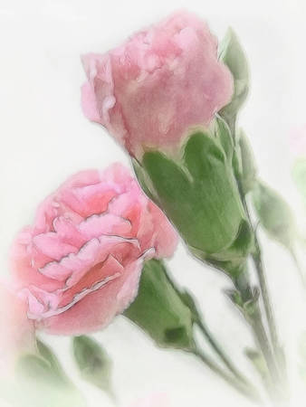 Pink Carnations 2 Serene