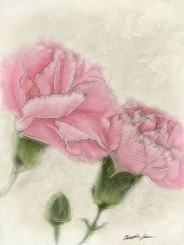 Pink Carnations 3 Color with Sepia