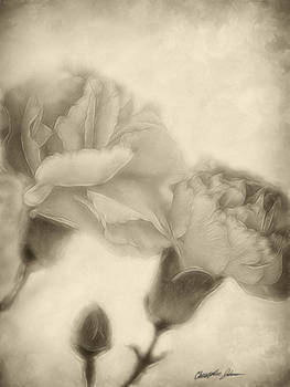 Pink Carnations 3 Antiqued 2