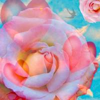 Hearts & Roses IMAGEKIND Art Prints & Posters by Victoria Sponge