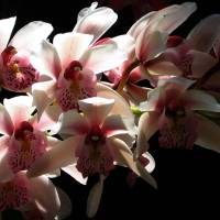 Orchids by Patricia Schnepf
