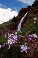 COLUMBINES AND WATERFALL