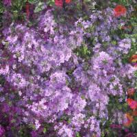 *Flowers by Patricia Schnepf