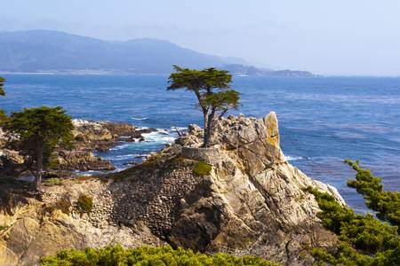 Lone Cypress by Lou Ford