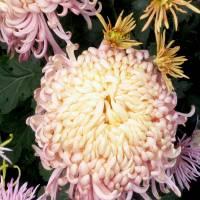 *Flower...Fantasy by Patricia Schnepf
