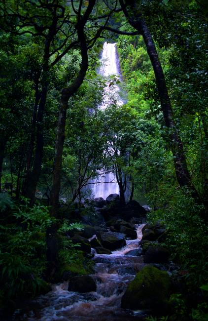 Manoa Valley Falls