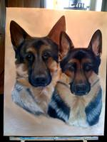 German Shephards
