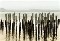 pilings in fog