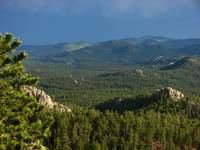 Custer State Park as Seen From the Needles Highway