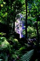 Manoa Trail Waterfall