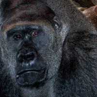 Primate - 1 by Patricia Schnepf
