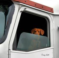 Turbo the Truckin' Dog