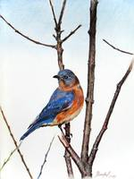 Blue Bird on dry Branches
