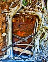 Strangler Ficus Root Surrounding Door
