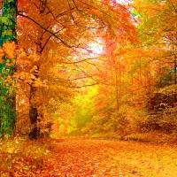 Vermont Autumn Art Prints & Posters by Vicky Brago-Mitchell