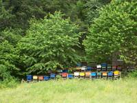 Colorful Bee hive