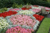 Regents Park  flower beds
