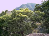Malinalco Trees and Mountain Horizon