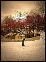 Berry tree in the snow