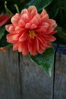 Beautiful Orange Flower Blossom