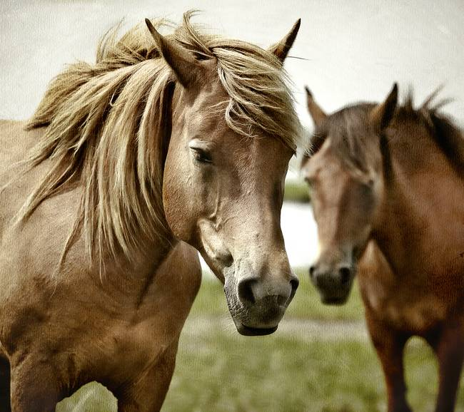 Assateague Pair