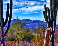 Sonoran Landscape with Cactus and Hills