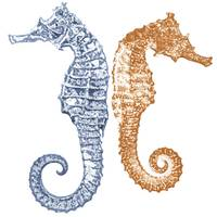 Two Seahorses