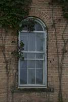 Arched Vine