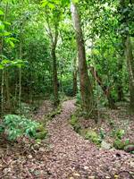 Hiking trail in Honduras