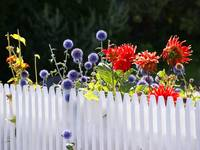 Flower Fence