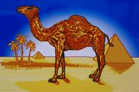 CAMEL Sign - Roswell, New Mexico