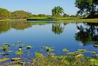 Lake in Weston, Florida