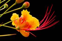 Tropical Flower 4