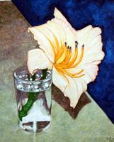 Day Lily In a Water Glass