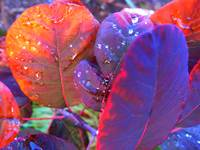 Watered Leaves