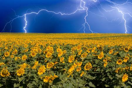 Lightning on the Sunflower Horizon