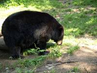 Black bear time 2