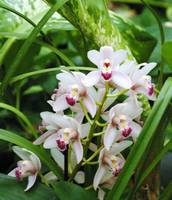 white and purple orchids and greenery