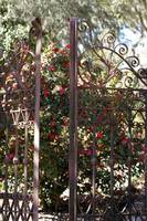 ironwork gate and blossoms at Mepkin Abbey