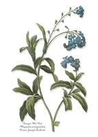 ForgetMeNot, Redoute