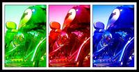 Harley Davidson Tri Color