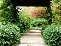 Path Through Luxurious Garden