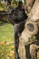 Black cat resting in tree