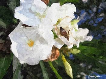 Single White Oleander with Bee 1 Painterly