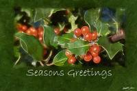 Holiday Holly - Seasons Greetings